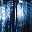 Dark forest — Stockfoto