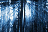 Dark forest — Stock Photo