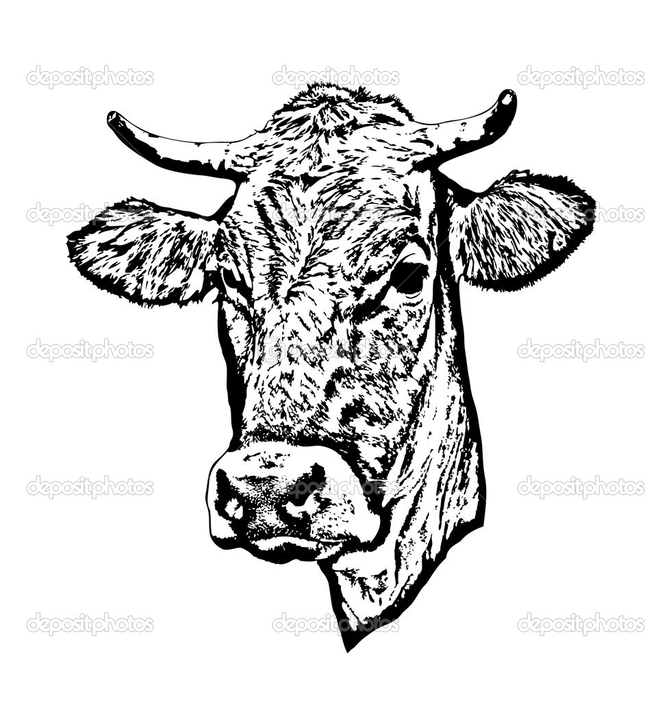 Flatiron Steak as well AI410E06 likewise Post pork Butcher Cuts Diagram 303758 as well Beef body additionally Royalty Free Stock Image Beef Cuts Chart Cow Isolated White Background Vector Illustration Image39999486. on cow meat diagram