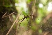 Dangerous spider — Stock Photo