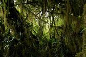 Jungle vegetation — Stock Photo