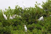 Egrets scene — Stock Photo