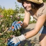 Woman in the yard gardening — Stock Photo #4202438