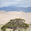 Great Sand Dunes Nation Park — Stock Photo