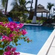 Stock Photo: Beautiful bougainvillea flowers by a pool