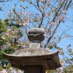 Spring in Japan — Stock Photo