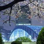 primavera di Tokyo — Foto Stock