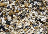 Seashell background — Stock Photo