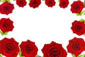 Red roses frame — Stock Photo