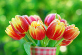 Bunch of red- yellow tulips — Stock Photo