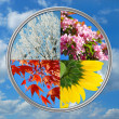 图库照片: Four seasons of the year on sky background