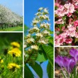Spring time-collage - Stock Photo