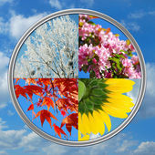 Four seasons of the year on sky background — Stock Photo