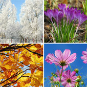 Four seasons of the year — 图库照片