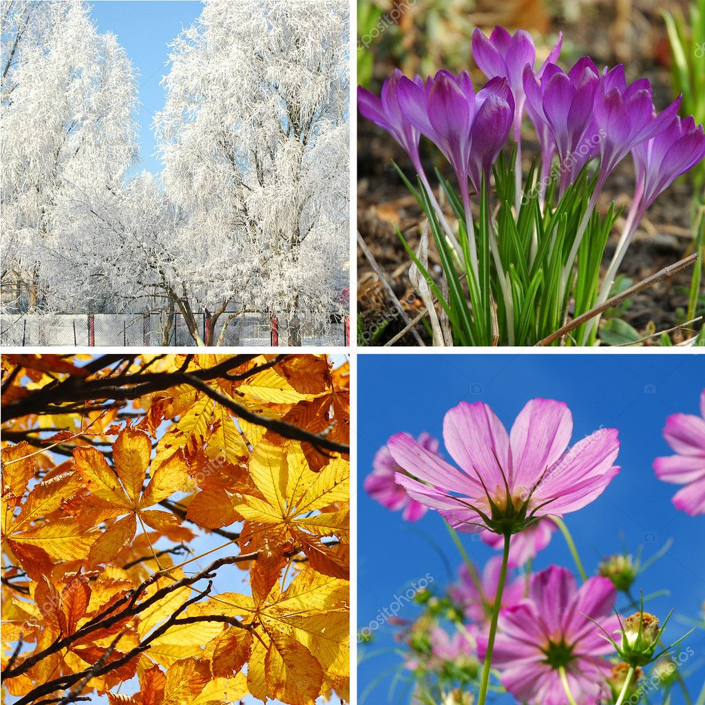 Nature collage in square shape with  four seasons of the year  — Stockfoto #5295061