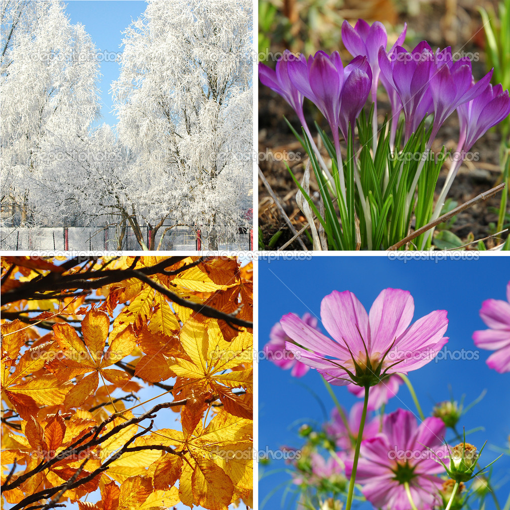 Nature collage in square shape with  four seasons of the year  — 图库照片 #5295061