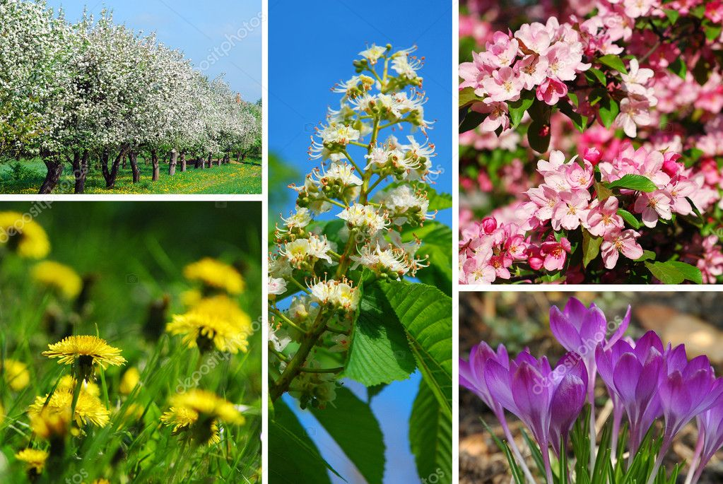 Nature collage with spring flowers and trees — Stock Photo #5295135