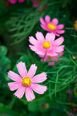 Pink flowers on grass — Stock Photo