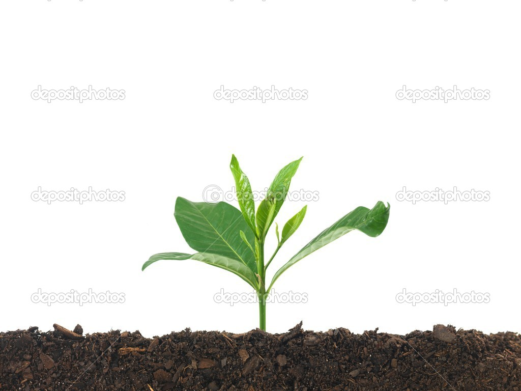 A seedling growing in soil isolated against a white background — Stock Photo #5369022