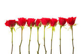 Red roses on white isolated background — Stock Photo