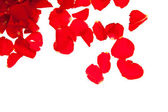Red rose petals isolated on white - Valentine's Day — Photo