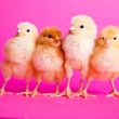 Easter chickens on pink background — Stock Photo #4842772