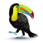Toucan — Stock Vector