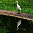 Stock Photo: Egret