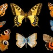 Butterfly group - Stock Photo