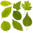 Set of green leaf — Foto Stock
