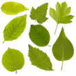 Set of green leaf — Stock Photo