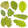 Set of green leaf — Stock fotografie