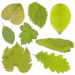 Set of green leaf — Photo