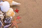 Starfish, seashells — Stock Photo