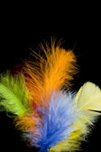 Colored feather — Stock Photo