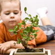 Stock Photo: Boy and bonsai