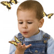 Stock Photo: Boy looking at butterfly