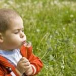 Boy blowing dandelion — Stock Photo