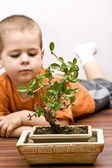 Boy and the bonsai — Stock Photo
