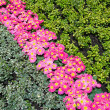 Beautiful flowerbed — Stock Photo