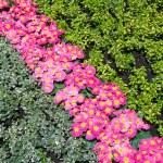 Beautiful flowerbed — Stock Photo