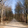 The Tiergarten in winter — Stock Photo