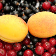 Foto Stock: Currant and apricot