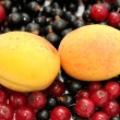 Foto de Stock  : Currant and apricot