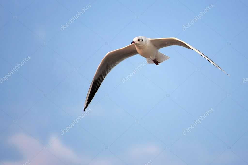 Sea gull on background sky                                     — Stock Photo #5348187