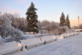 Ice-covered benches and shrubs in the park — Stock Photo