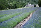 ラベンダーのフィールド セナンク修道院プロヴァンス — ストック写真