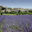 Lavender fields hilltown provence france — Stock Photo