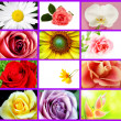 Flowers Collage — Foto Stock