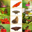 Butterfly Collage - Foto Stock